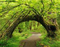 C-021 Живая арка 300х238 Природа