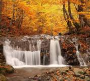 C-095 Осенний лес 300х270 Природа
