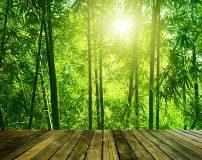 C-372 Выход в бамбуковую рощу 300х238 Природа