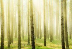 D-066 Весеннее утро в лесу 400х270 Природа