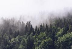 T-247 Туманный лес 400х270 Природа
