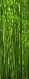 C-270 Бамбук 100х270 Природа