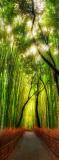 C-271 Бамбуковая роща 100х270 Природа