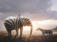 МФ9253 В мире животных