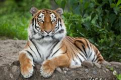 МФ9280 В мире животных