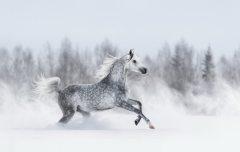 МФ9290 В мире животных