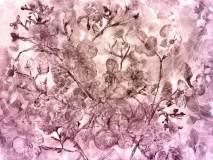 2-2 образец 400х300 Хлопок роз Aquarelle