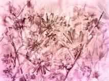 5-2 образец 400х300 Цикорий роз Aquarelle