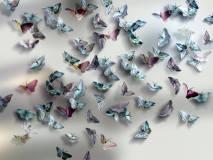 Delicacy 2_1 Farfalle