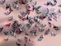 Delicacy 2 Farfalle