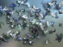 Delicacy 3 Farfalle