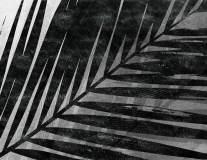 19187 Selva 2018