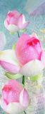 MRB-0025 Цветы рулонные шторы