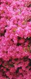 MRB-0204 Цветы рулонные шторы