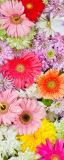 MRB-0205 Цветы рулонные шторы