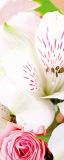 MRB-0210 Цветы рулонные шторы