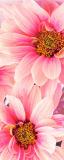 MRB-0217 Цветы рулонные шторы