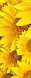 MRB-0218 Цветы рулонные шторы