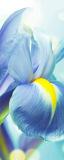 MRB-0219 Цветы рулонные шторы