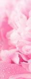 MRB-0220 Цветы рулонные шторы