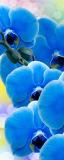 MRB-0225 Цветы рулонные шторы