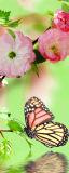 MRB-0227 Цветы рулонные шторы
