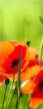 MRB-0234 Цветы рулонные шторы