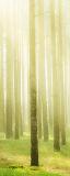 MRB-0279 Природа рулонные шторы